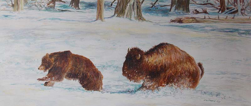 Bear and Buffalo