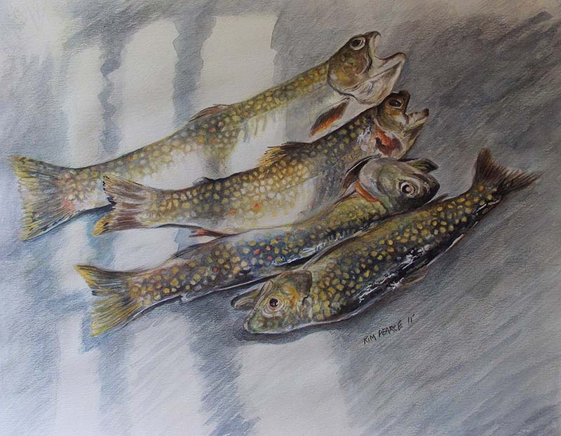 Brook Trout in Sink