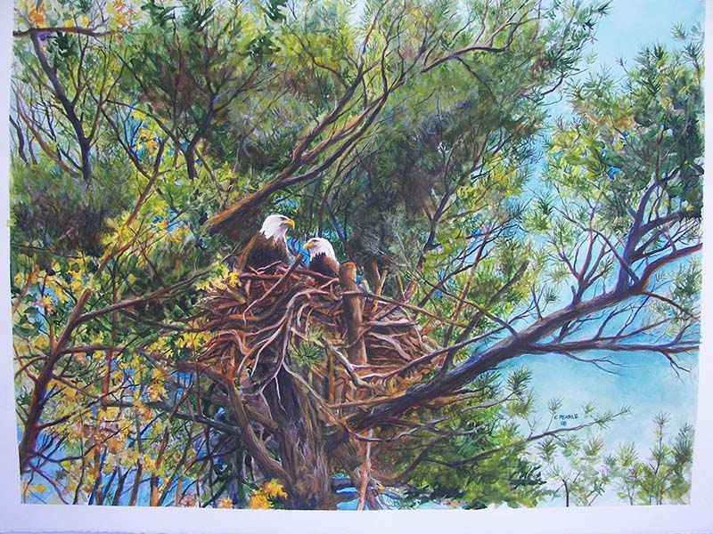Eagles in Nest Color