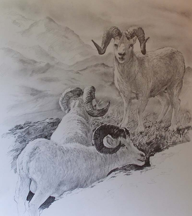 Mt Sheep Pencil Drawing
